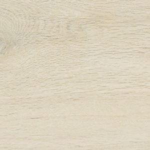 Kauri Arce, 20×120